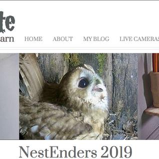 The NestEnders Season hits the WildlifeKate Website!