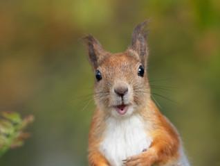 Finland 2019 – Stunning Squirrels
