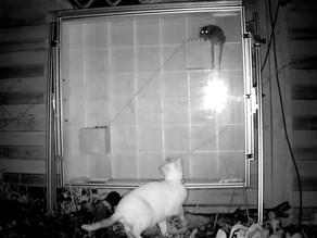 A Mammal Maze Update….