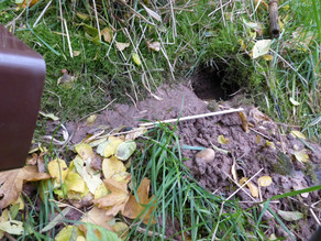 Rat Burrow Monitoring