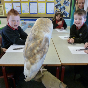 Barn Owls, EcoBuild and Chicks!