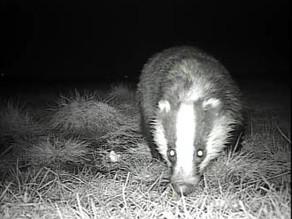 Badger Excitement!!