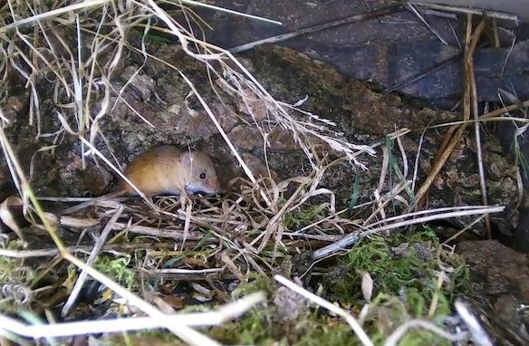 Wildlife Pond Mammal Box HD 2016-01-02 07-46-08.685