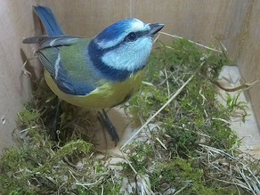 My latest nest Box with new IP Camera