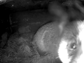 Our first Badger Chamber footage… & more!