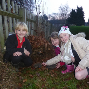 Learn about Wildlife through a Practical Project