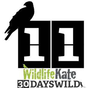 #30DaysWild – Day 11  The Rat Clean-up Squad