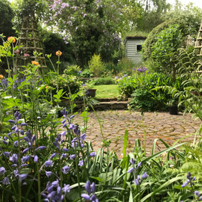 A tour of my Patch…. May 2018