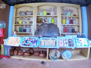 It's cold and wet outside, so Mousey Sweet Shop goes live!