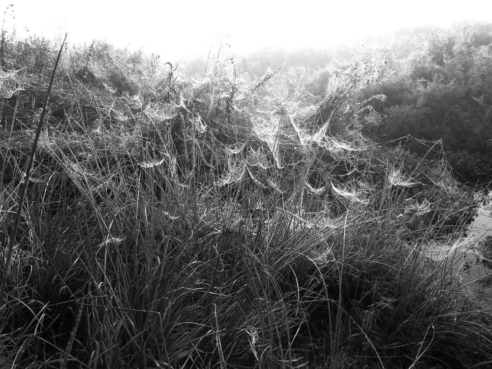 Spiders&Webs_-1000281