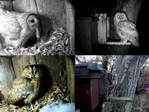 Snowy Wildlife and Tawny Excitement!