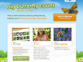 Big Butterfly Count…and some photography!