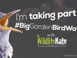 Big Garden Birdwatch 2021