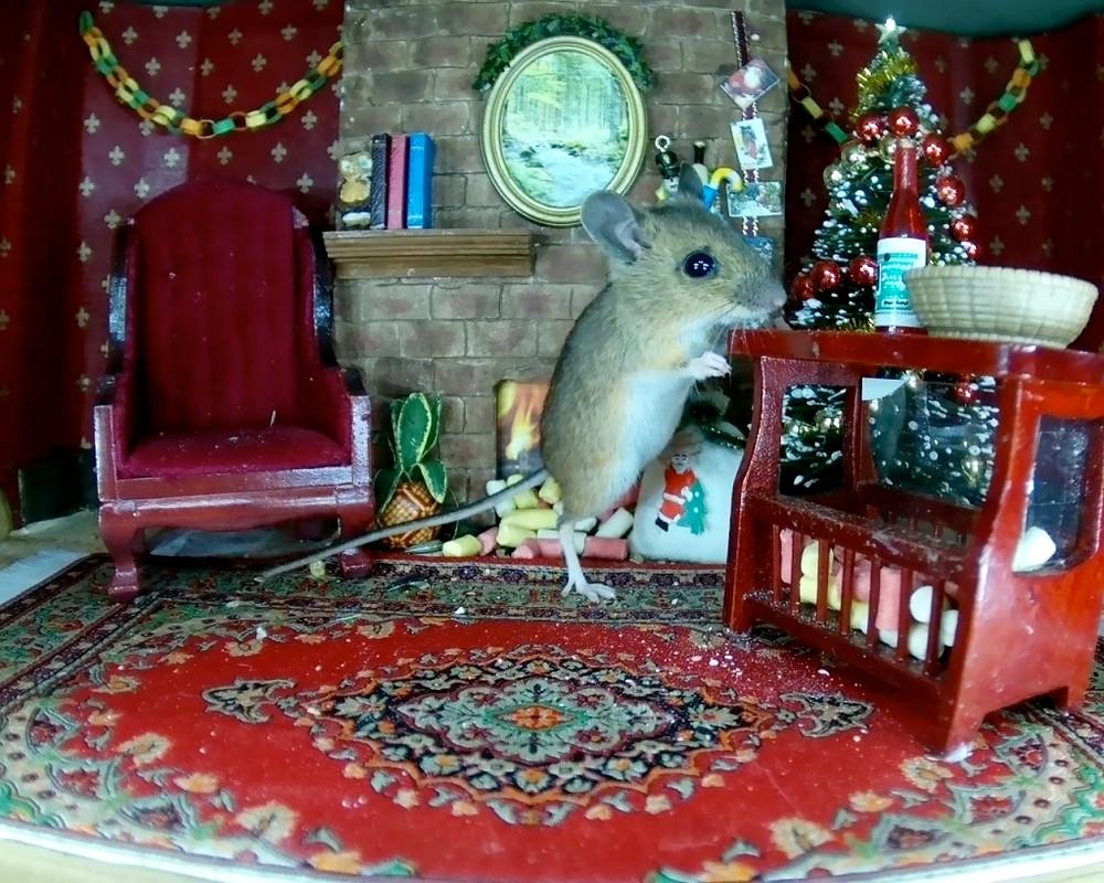 xmas-mouse-stashing-suet_00010