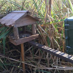 Harvest Mice, Bank Voles & Field Voles…. and Tawnies