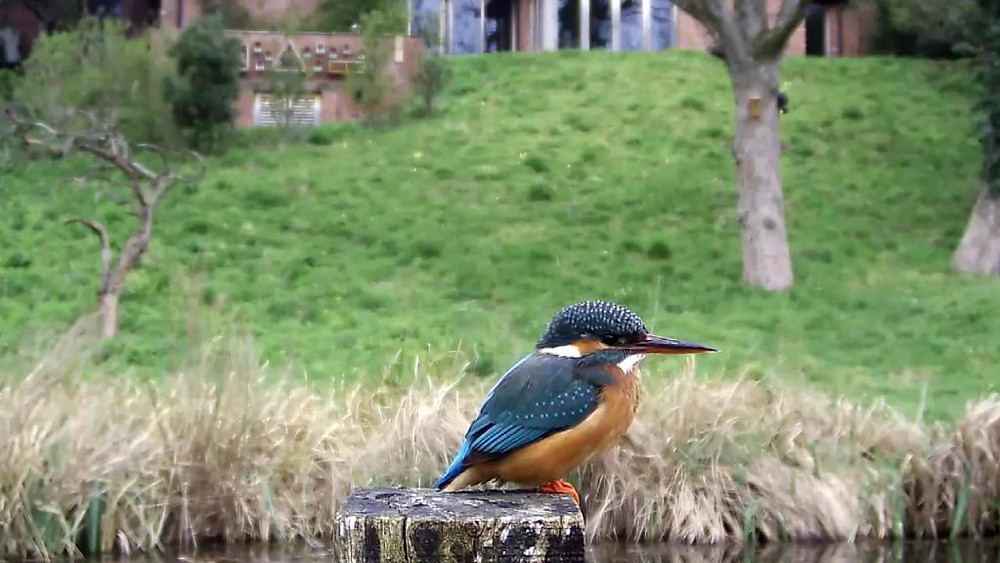 Kingfisher VIVOTEK 192.168.1.132 2016-04-15 15-23-13.490