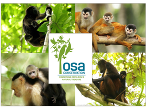 Osa Conservation, Costa Rica….. A dream trip, come true!