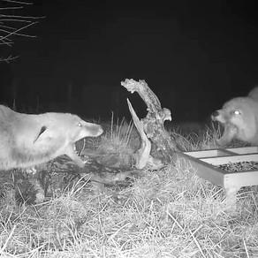 WildlifeKate Patch Camera Updates