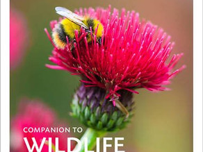 Review: A Companion to Wildlife Gardening – Chris Baines