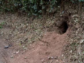 Badger Sett Discovery