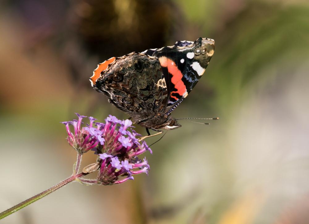 yv_butterflies-7864