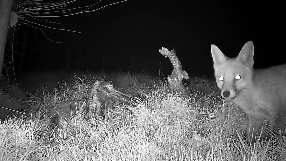 vivotek-fox-cam-2016-12-27-03-01-46-591