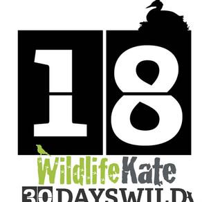 #30DaysWild – Day 18   Start of 'Ultimate Shetland' Tour