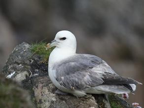 Shetland 2015 – Day 1