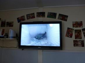 School Nest Box Joy!
