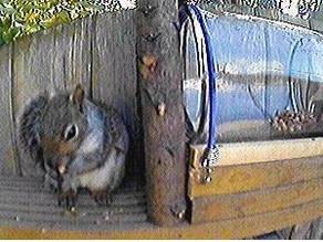 The 'Nut House' Cam!!