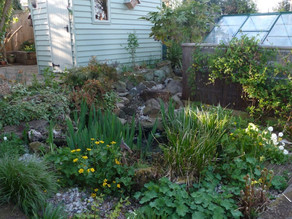My garden starts to take shape