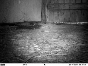 Bushnell Rats!