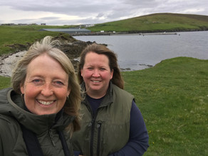 I return to Shetland  …..