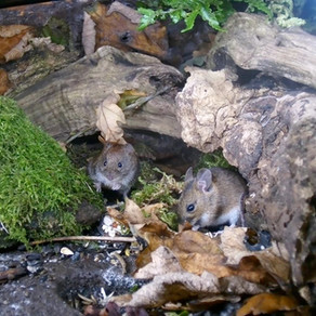 Snuggled Squirrels and Nibbling Mates