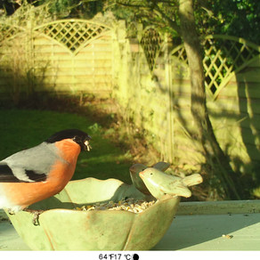 Monitoring feeders using the Bushnell NatureView Live View