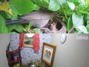 NestEnders Update – April 7th