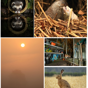 Mammal Society Photography Competition Winners Announced