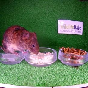 #MammalChallenge 4: The Food Test