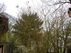 Oak tree nest box: Bird hide treehouse