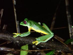 Osa Conservation – Costa Rica Part 3: Wildlife Galore; The Rainforest Habitat, Species & R