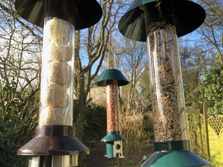 Some new 'Roamwild' feeders in the WildlifeKate Patch!