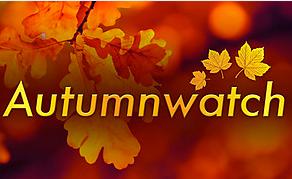 Autumnwatch Excitement!