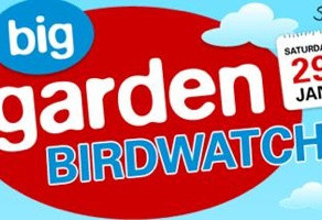 Big Garden Birdwatch 2011