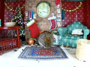 An exclusive peek into how voles spend their Christmas…..