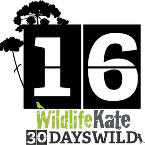 #30DaysWild – Day 16  Inspirational Photography