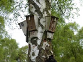 Bat Monitoring at Silver Trees
