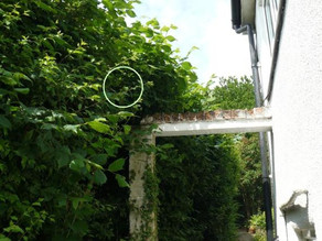 So where is the blackbird nest?????