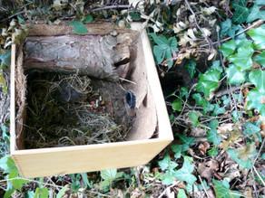 I build a nesting chamber for a new live stream cam