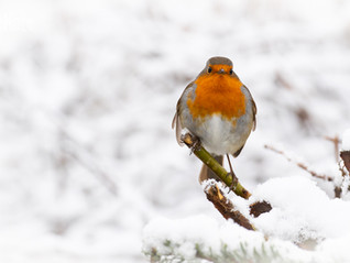A Snowy Wildlife Photoshoot