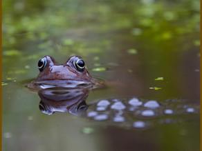 New pond cam